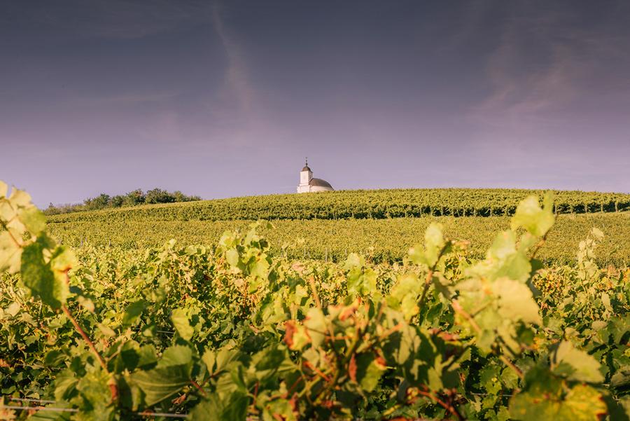 Tokaj atrakcje. Co warto zobaczyć: winnice, wino, Kaplica świętej Teresy, Tokaj.