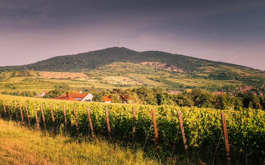 Co warto zobaczyć: winnice, wino, miasto Tokaj.
