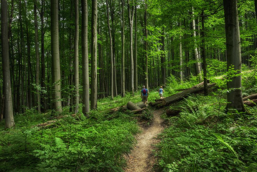 Największe atrakcje Beskidu Niskiego - co warto zobaczyć w Beskidzie Niskim. Bukowe lasy w Magurskim Parku Narodowym.