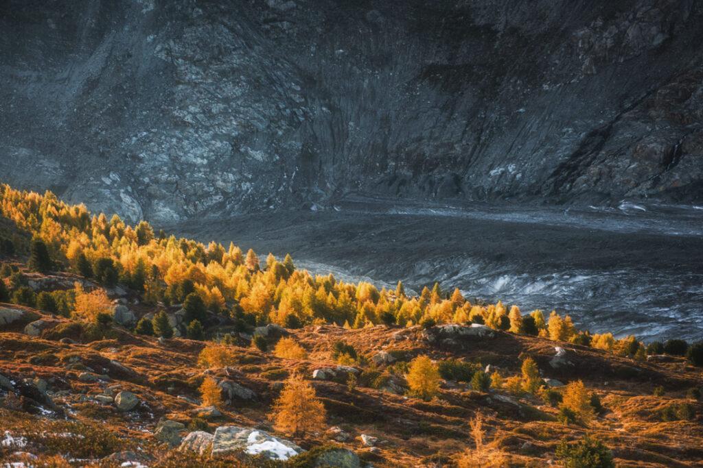 Roślinność stoków doliny Aletschgletscher.