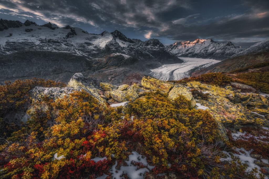 Roślinność stoków doliny Aletschgletscher