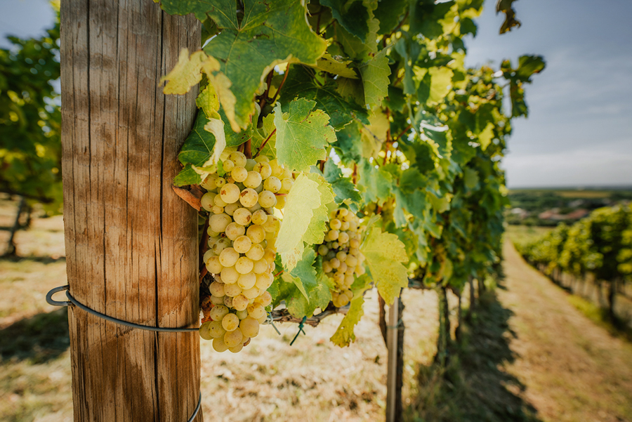 Tokaj atrakcje. Co warto zobaczyć: winnice, wino, miasto Tokaj.