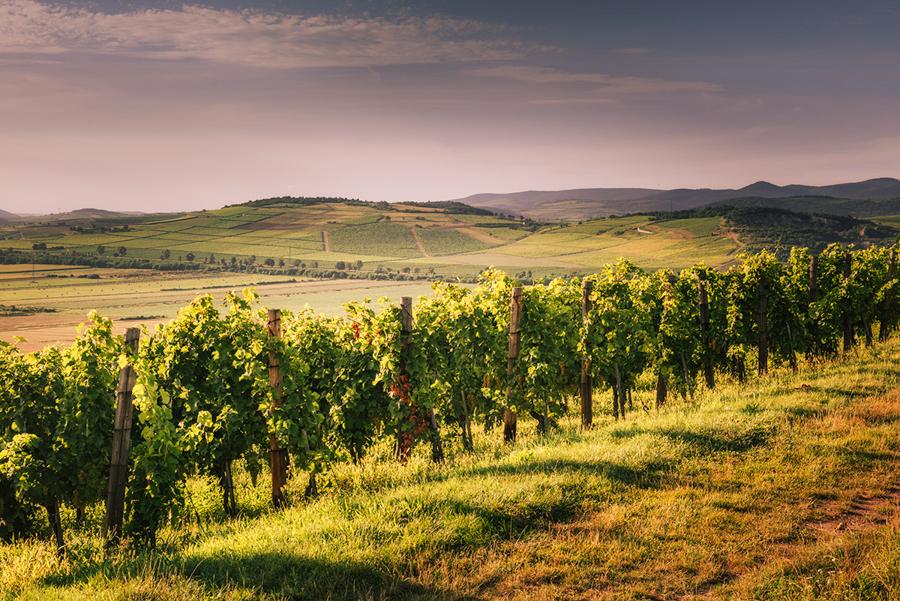 Tokaj – wino, góra i winnice. Atrakcje Tokaju – zwiedzanie miasta i regionu.