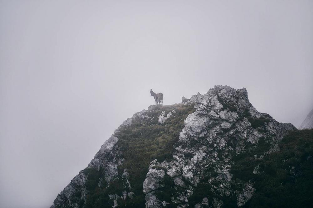 Największe atrakcje Szwajcarii. Co zobaczyć w Szwajcarii. Góra Pilatus i Jezioro Czterech Kantonów. Lucerna. Szlak pieszy na Pilatus. Koziorożec alpejski.