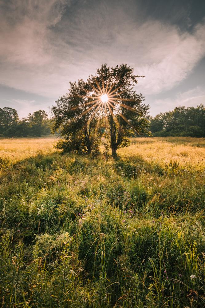 Pozostałości sadu w Łopience. Łopienka - największe atrakcje Bieszczadów.