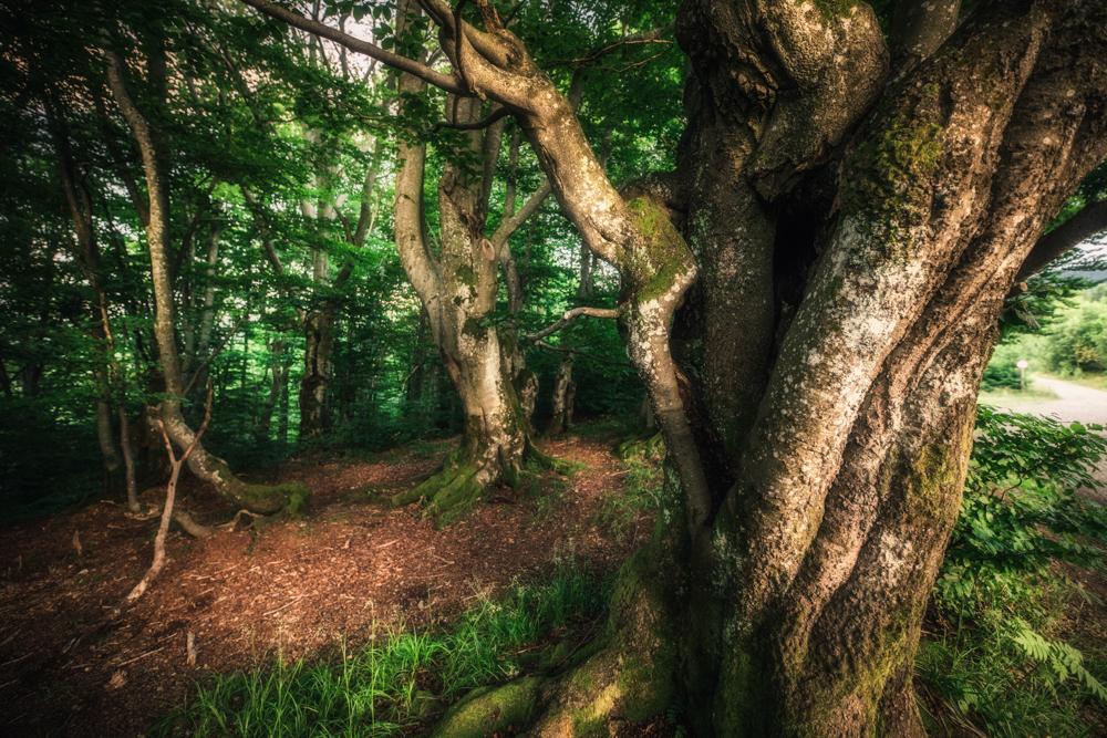 Lasy Bieszczadzkiego Parku Narodowego wpisane na listę UNESCO.